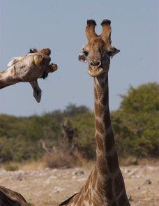 2020搞笑野生动物摄影比赛入围作品