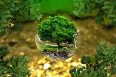 破碎玻璃球里的树