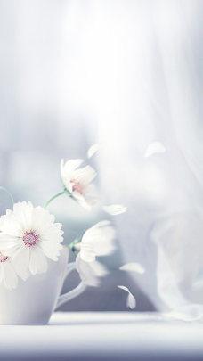 清新花朵H5背景