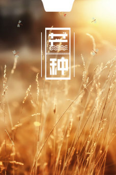 简约芒种黄色朦胧草丛